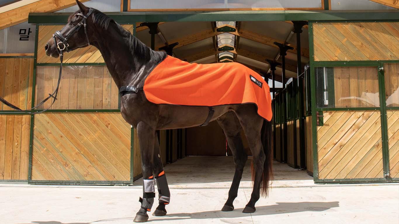 categorie cheval v2mobile